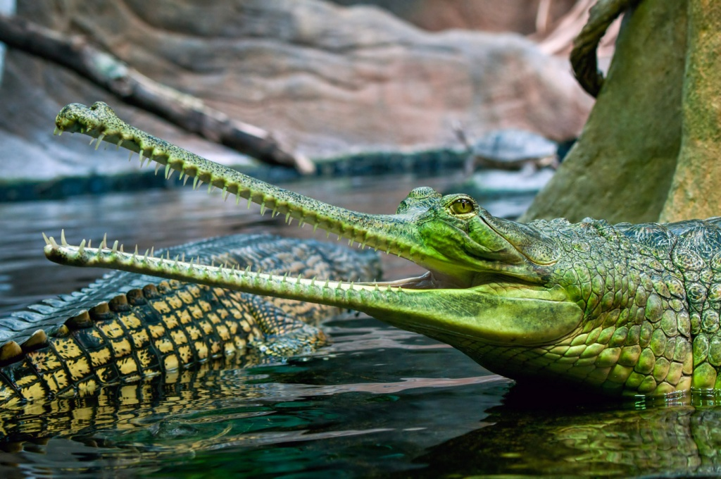 крокодилы-5.jpg