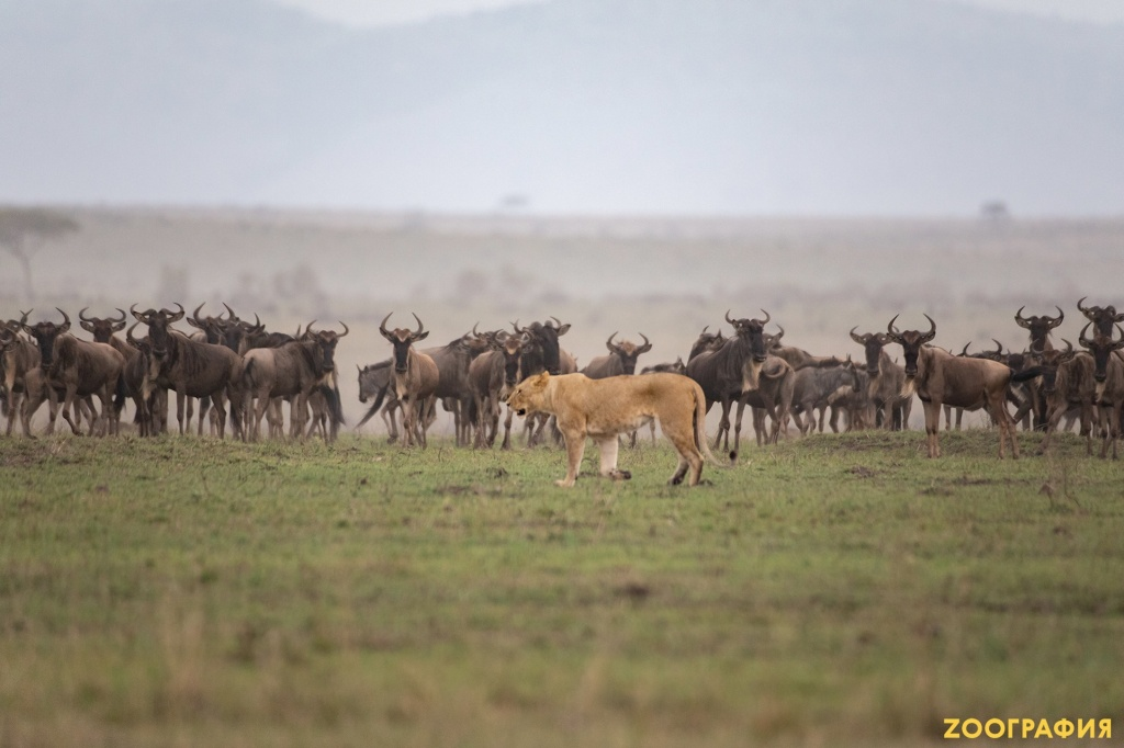 safari-tour-oct.2019_3.jpg