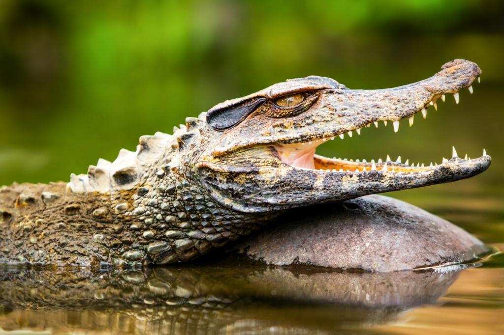 крокодилы-3.jpg